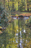 Creek in autumn forest Stock Photos
