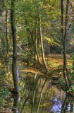 Creek in autumn forest Royalty Free Stock Images