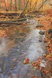 Creek in autumn forest Stock Image
