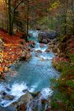 Creek in autumn forest. Small creek in the fall colored forest near Pfronten in Allgäu, Bavaria, Germany Stock Photography