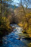 Creek in autumn forest. Small creek in the fall colored forest near Pfronten in Allgäu, Bavaria, Germany Royalty Free Stock Photography