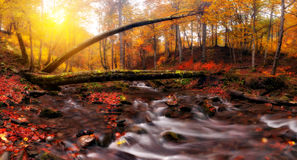 Creek at autumn forest Royalty Free Stock Photography