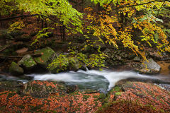 Creek in Autumn Forest Royalty Free Stock Photography