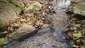 Creek with autumn leaf stock video footage