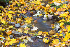 Creek with autumn leaves Stock Image