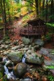 Creek in Autumn Mountain Forest Stock Photos