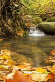 Creek in autumn, Spain. Creek in autumn with warm colors and leaves Stock Images