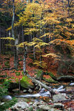 Creek in Autumn Sudetes Forest Royalty Free Stock Images