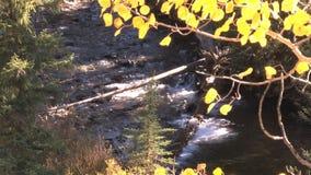 Creek in autumn stock video