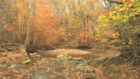Creek through autumn woods stock video