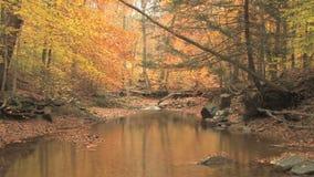 Creek through autumn woods stock footage