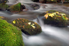 Creek Background Royalty Free Stock Images