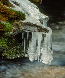 Creek Bank Icicles Stock Photos