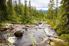 Creek in beautiful mountains and woodlands in Norway Stock Image