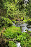Creek in the beautiful Wilderness, the summer Mountains Sumava in southern Czech Stock Images