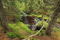 Creek in the beautiful Wilderness, the summer Mountains Sumava in southern Czech Stock Photos