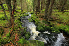 Creek in the beautiful Wilderness, the summer Mountains Sumava in southern Czech Royalty Free Stock Photos