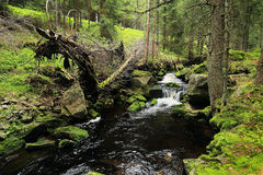 Creek in the beautiful Wilderness, the summer Mountains Sumava in southern Czech Royalty Free Stock Images