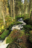 Creek in the beautiful Wilderness, the summer Mountains Sumava in southern Czech Stock Photography