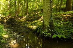 Creek bed with a big trunk beside Royalty Free Stock Photography