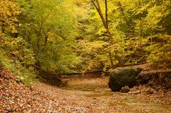 Creek bed covered with fallen leaves in autumn. In Cuyahoga Valley National Park Royalty Free Stock Photo