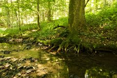 Creek bed in a forest Royalty Free Stock Photography