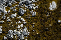 Creek bed Stock Images