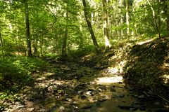 Creek bed in a lush green forest Stock Photo