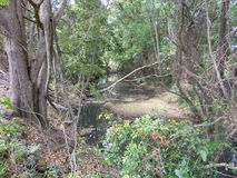 Creek bed showing tangled vegetation Royalty Free Stock Photo