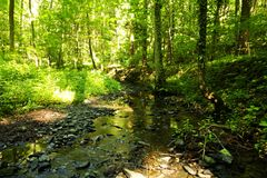 Creek bed in a wood during summer Stock Image