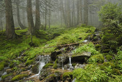 Creek in Carpathian forest Royalty Free Stock Image