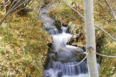 Creek with Cascade. Small waterfall in autumn with fallen leafs Royalty Free Stock Images