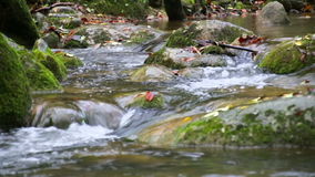 Creek Cascade with Fallen Red Leaves in Fall stock video footage
