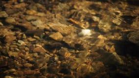 Creek stock footage
