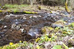 Clear creek flows slowly in the forest stock photo