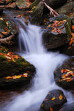 Creek closeup. Autumn creek closeup with yellow maple trees and foliage on rocks in forest with tree branches Stock Photo