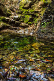 Creek Royalty Free Stock Images