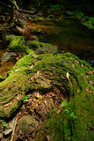 Creek closeup in a forrest Stock Photography