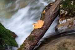 Creek closeup Stock Photo