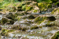 Creek closeup Royalty Free Stock Photo