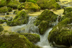Creek closeup Stock Images