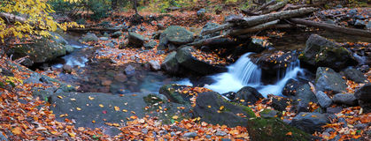 Creek closeup with yellow maple trees panorama. Autumn creek closeup panorama with yellow maple trees and foliage on rocks in forest with tree branches stock photos