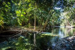 A creek in the Daintree Royalty Free Stock Photos