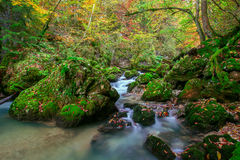 Creek deep in mountain forest Royalty Free Stock Photo