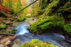 Creek deep in mountain forest Stock Photos
