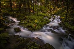 Creek deep in summer forest stock image