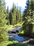 Creek and Elephant Mountain. A great flyfishing creek in the Gallatin Range with Elephant Mountain in the distance take during the summertime royalty free stock photography