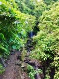 The Creek en medio de la belleza verde fotos de archivo