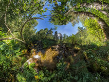 Creek in the fairy forest wide-angle panorama polar distortion Stock Photography