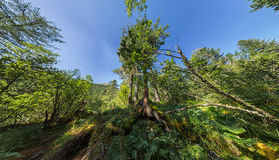Creek in the fairy forest wide-angle panorama polar distortion Stock Image
